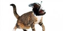 Angler Cat