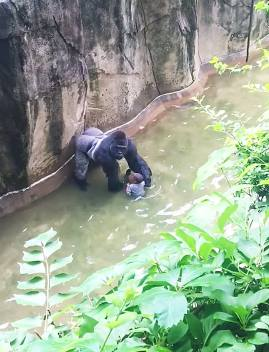 Gorilla Travesty