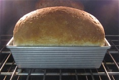 Hoat Loaf!